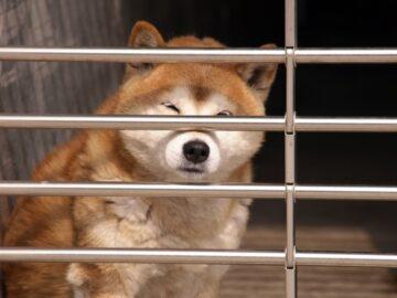 オリの中の犬